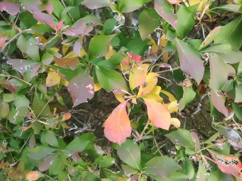 「小さい秋」見つけた...?
